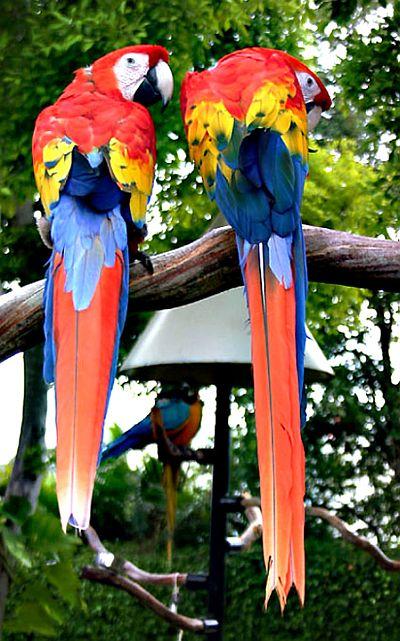 """Obrázek """"http://www.ingema.net/foto_na_www/haj-tenerif/papousc-1.jpg"""" nelze zobrazit, protože obsahuje chyby."""